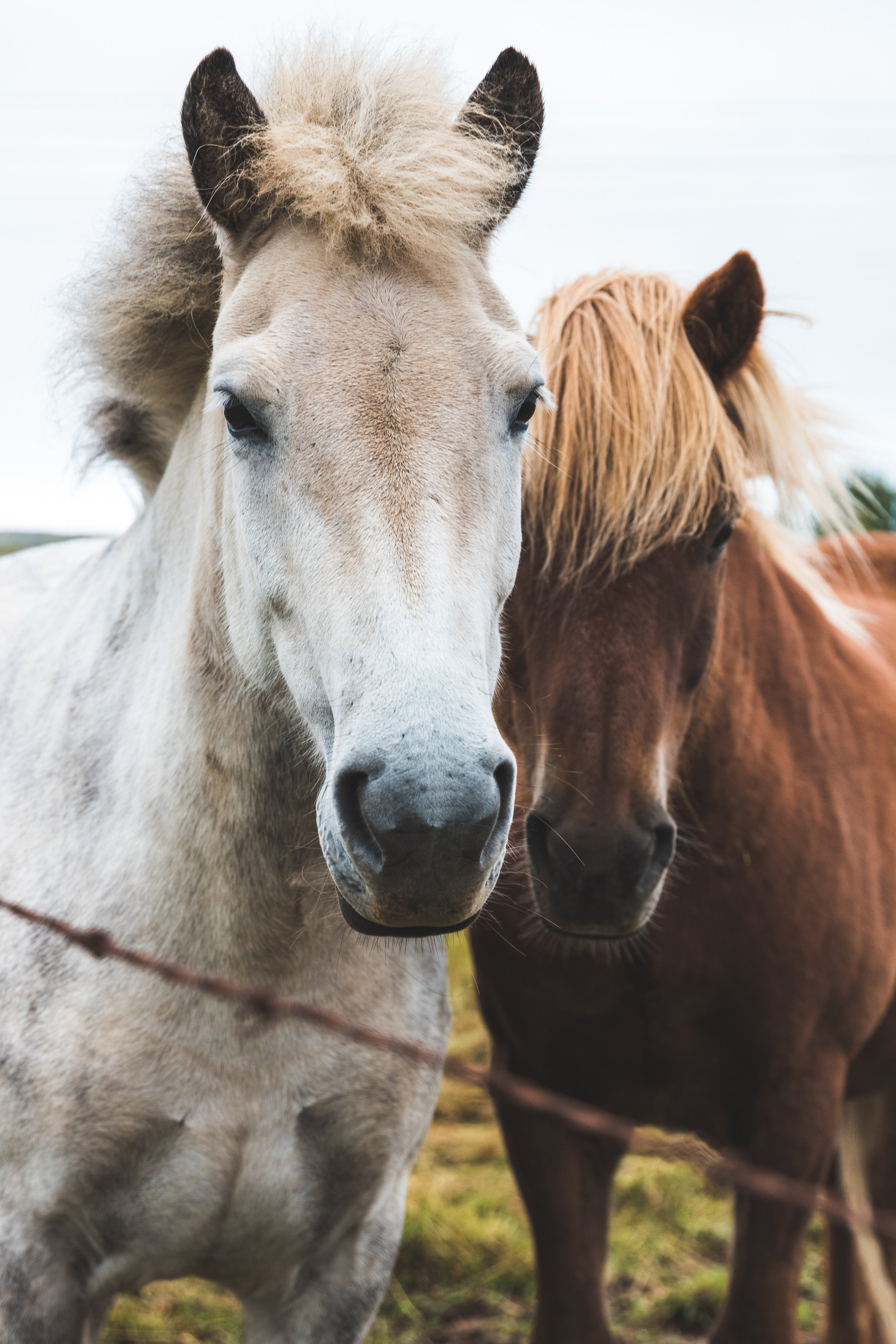alex-iby horses are best friends Up cL.jpg