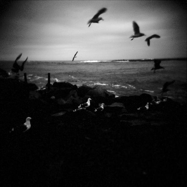 gulls 3.jpg