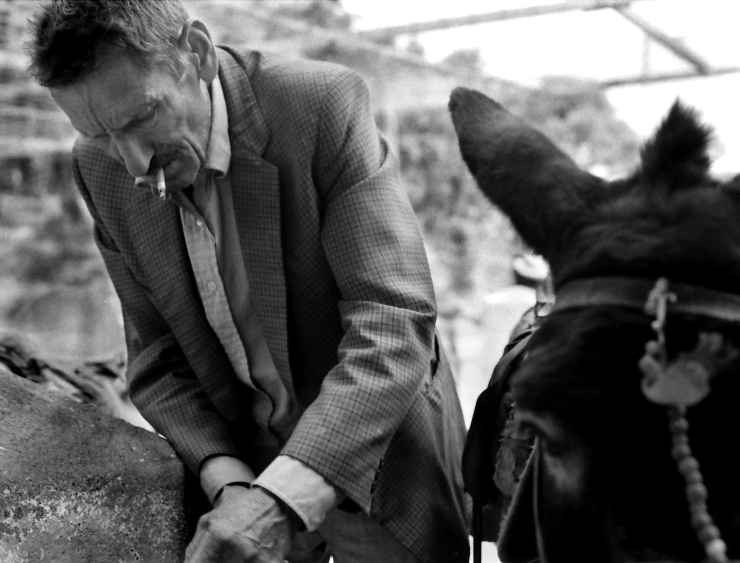 man and donkey2.jpg