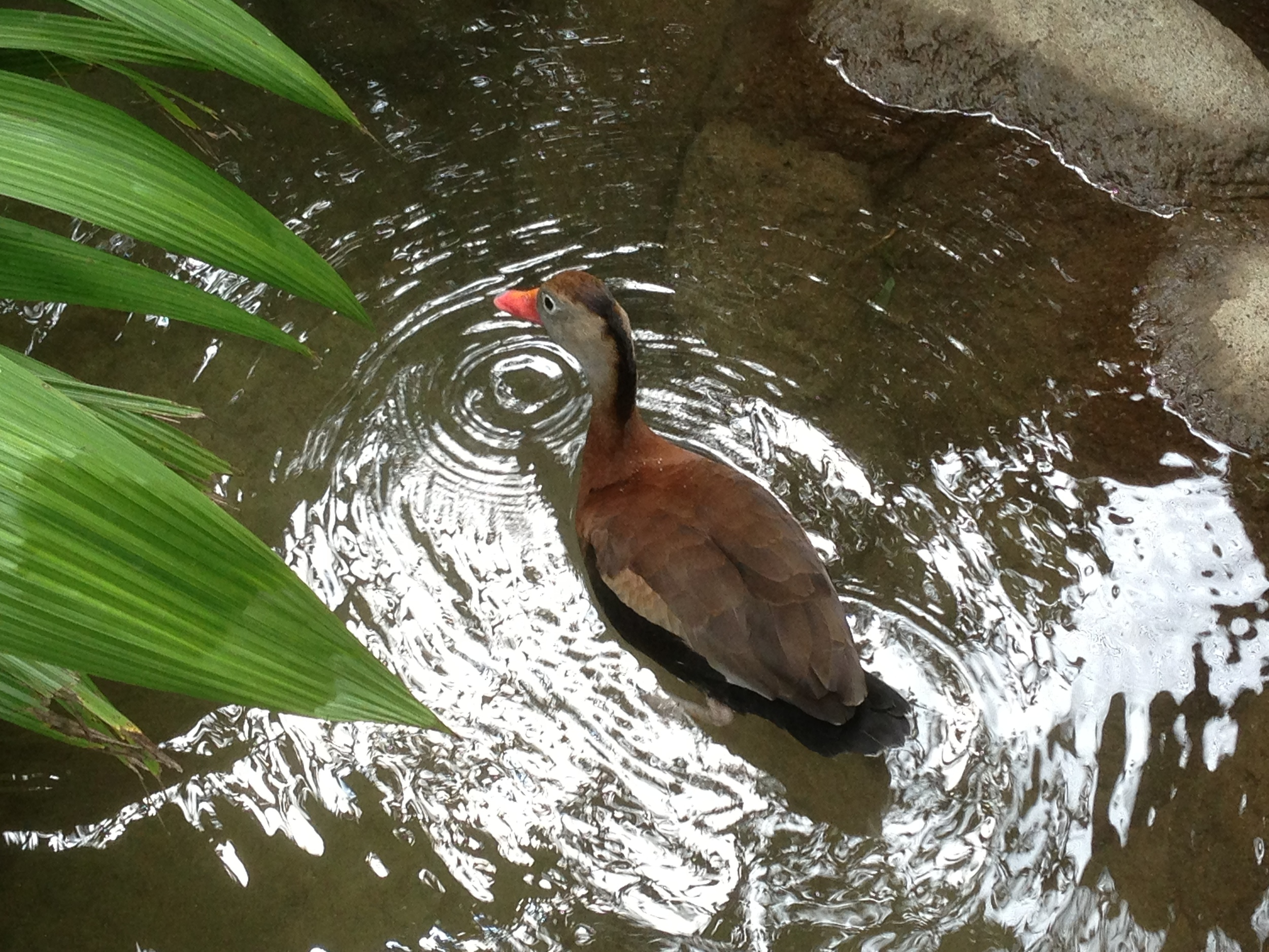 Luci Butler with Duck at La Paz Waterfall Gardens Costa Rica