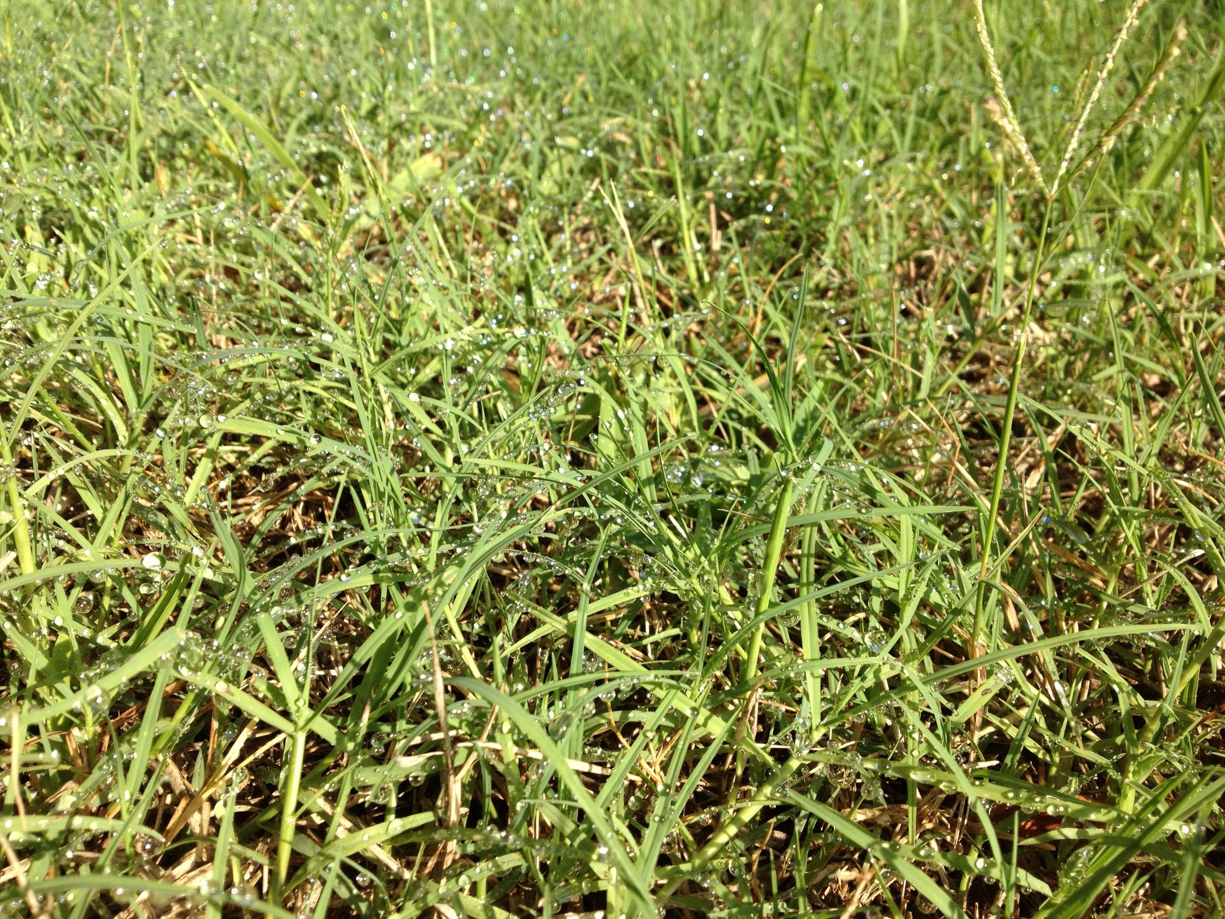 sparkling grass.JPG