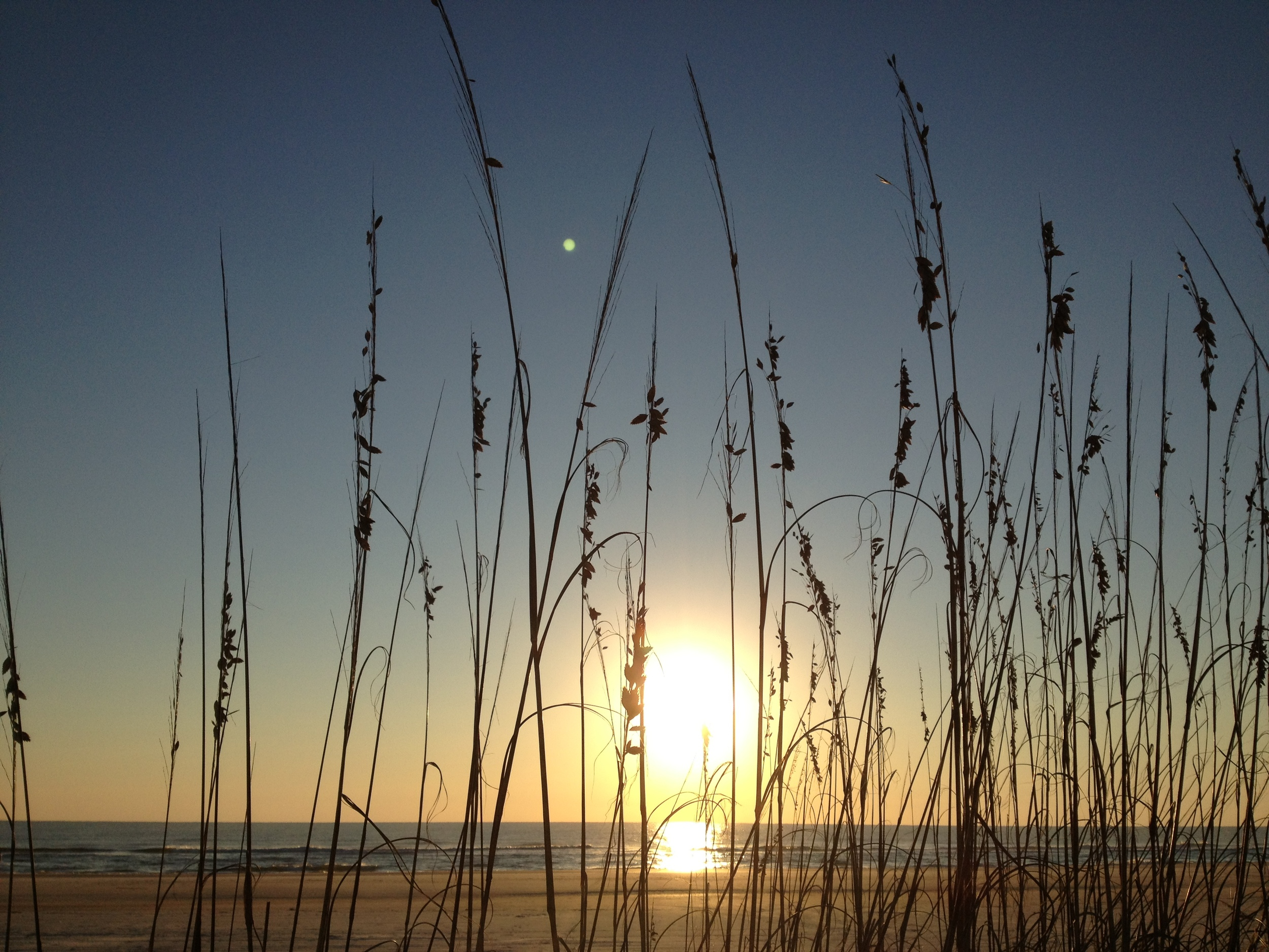 golden sea oats.jpg