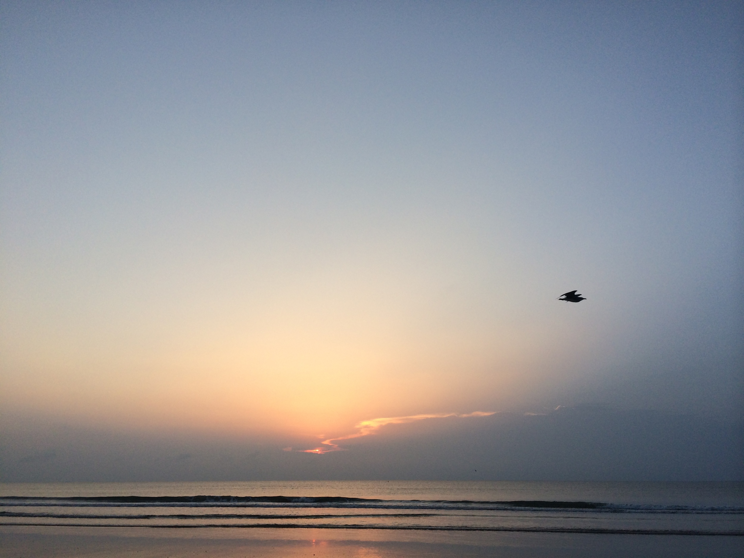 Dawn Flight, St. Augustine, August 2014