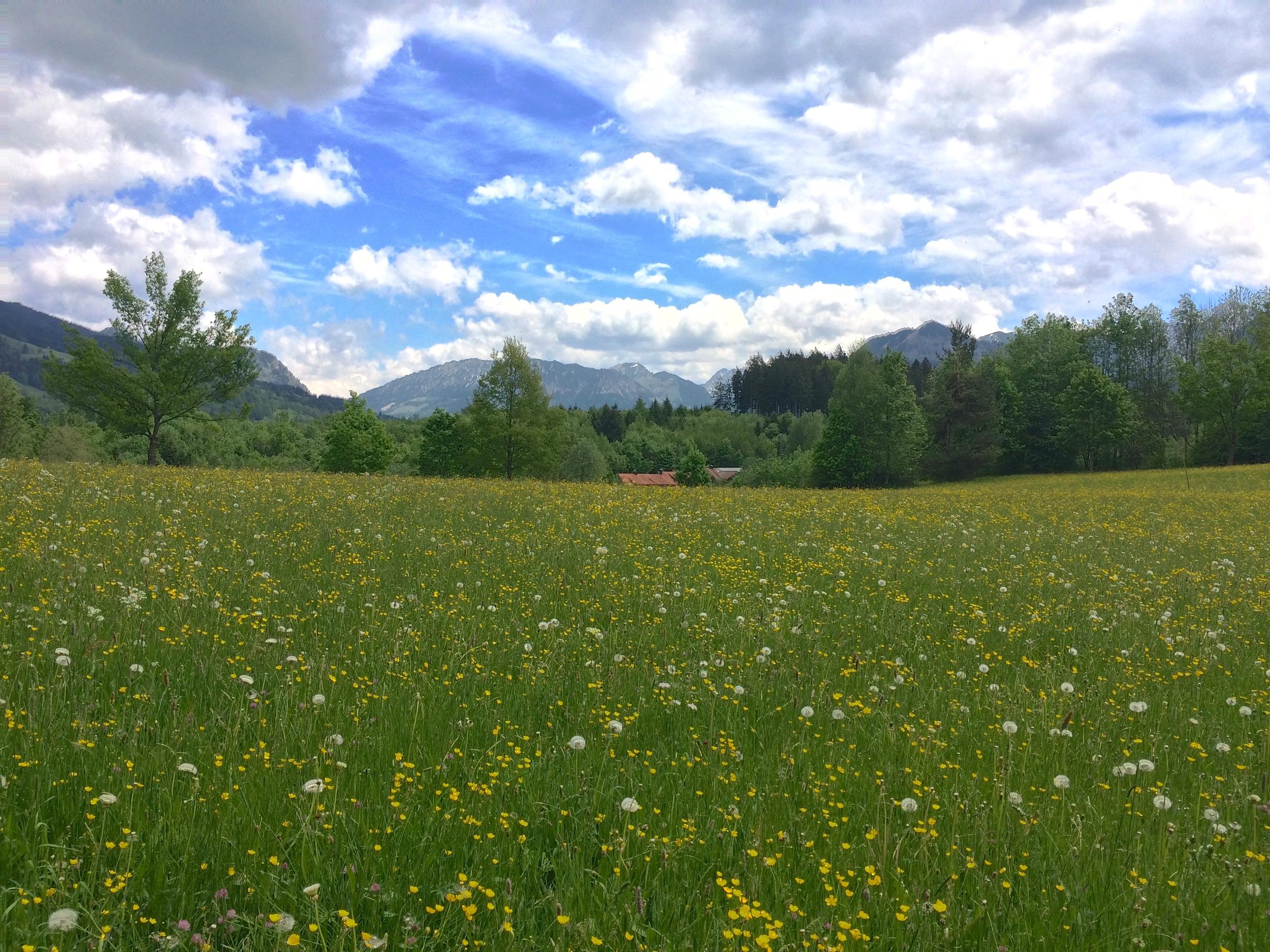 Bavaria Flowers, May 2015