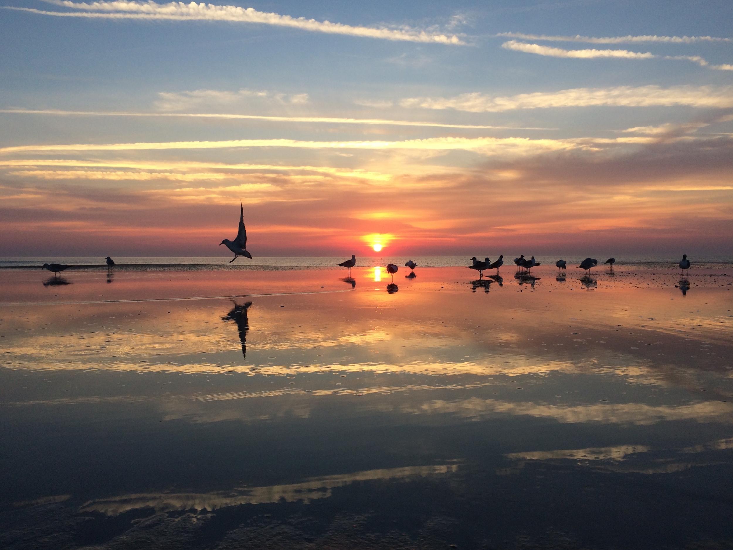 Seagulls 2015 St. Augustine