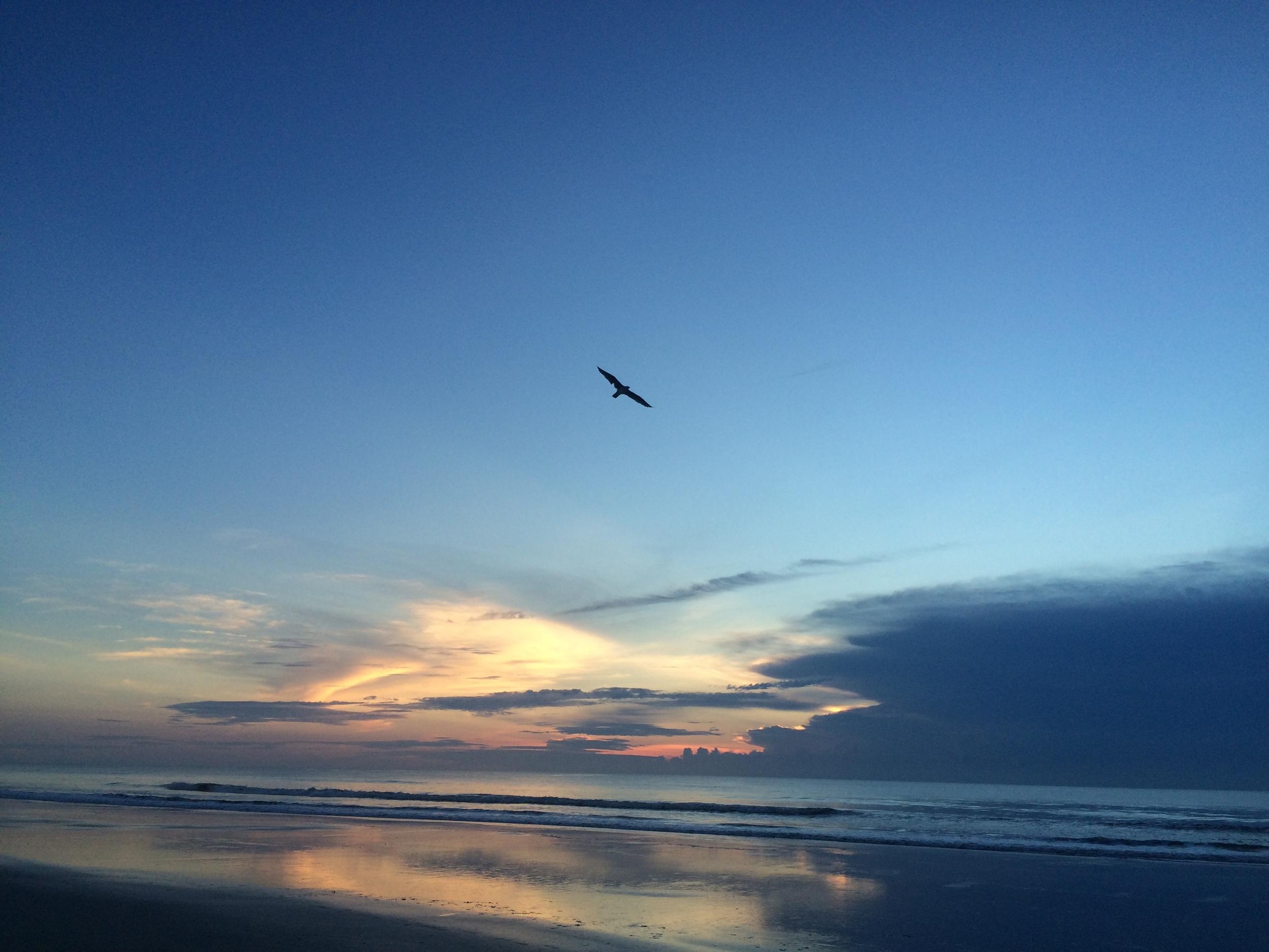 seagull st. augustine