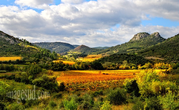 vineyard-fall-landscape-languedoc-south-france-n1182.jpg