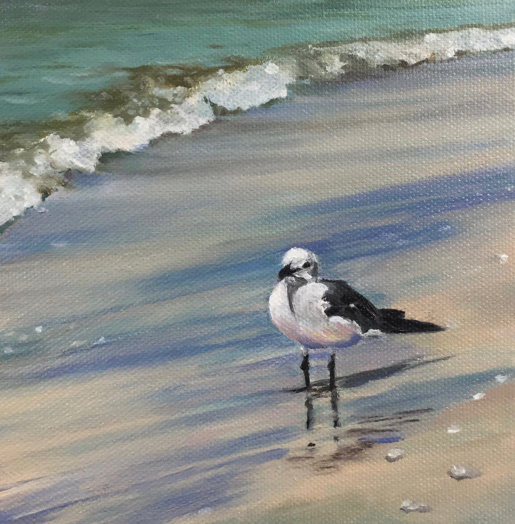 Beverley Gull.jpg