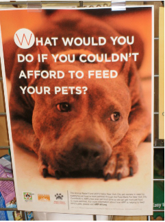 Our NYC food drive poster, created with the help of the Mayor's Alliance for NYC's Animals