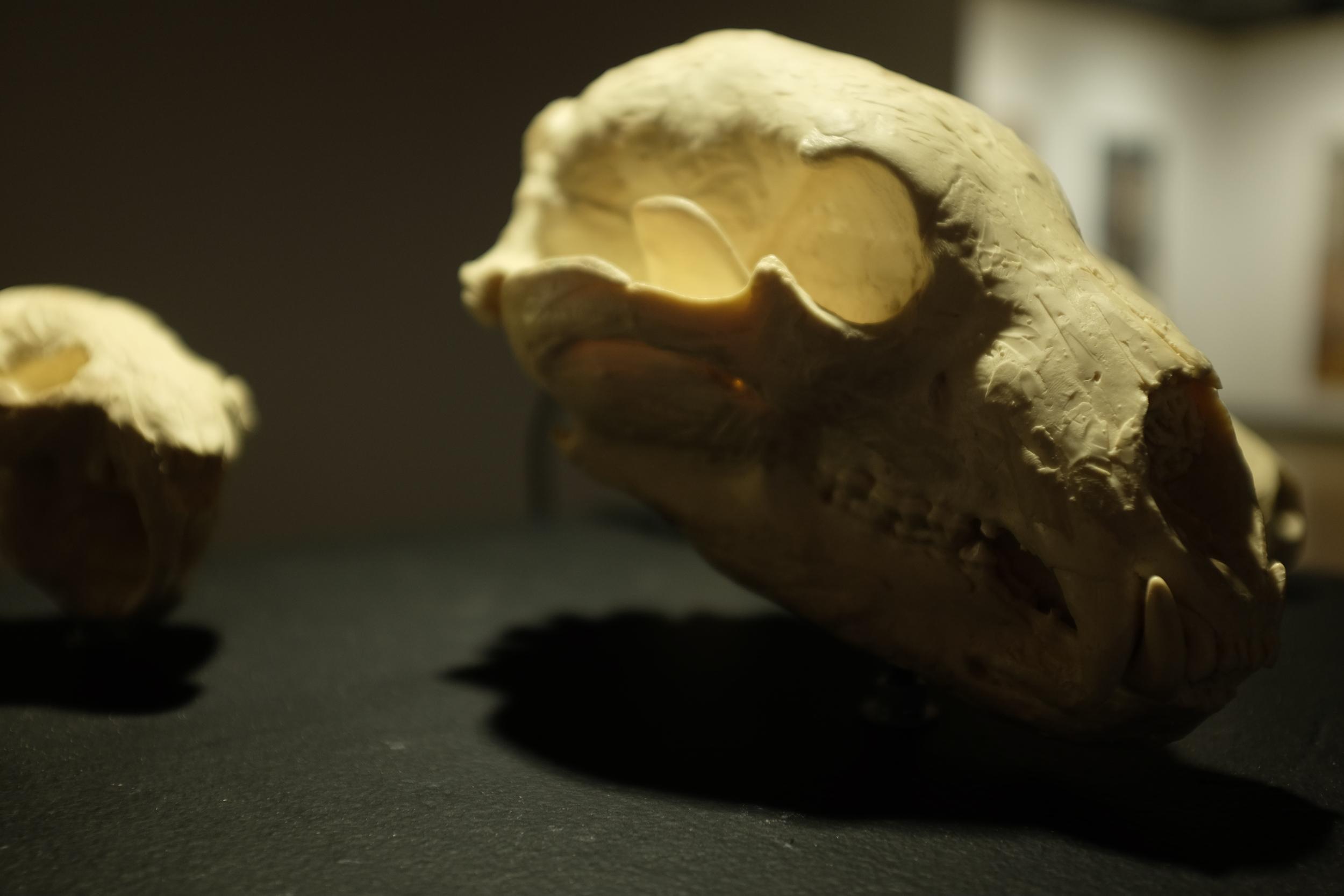 Skull Stories