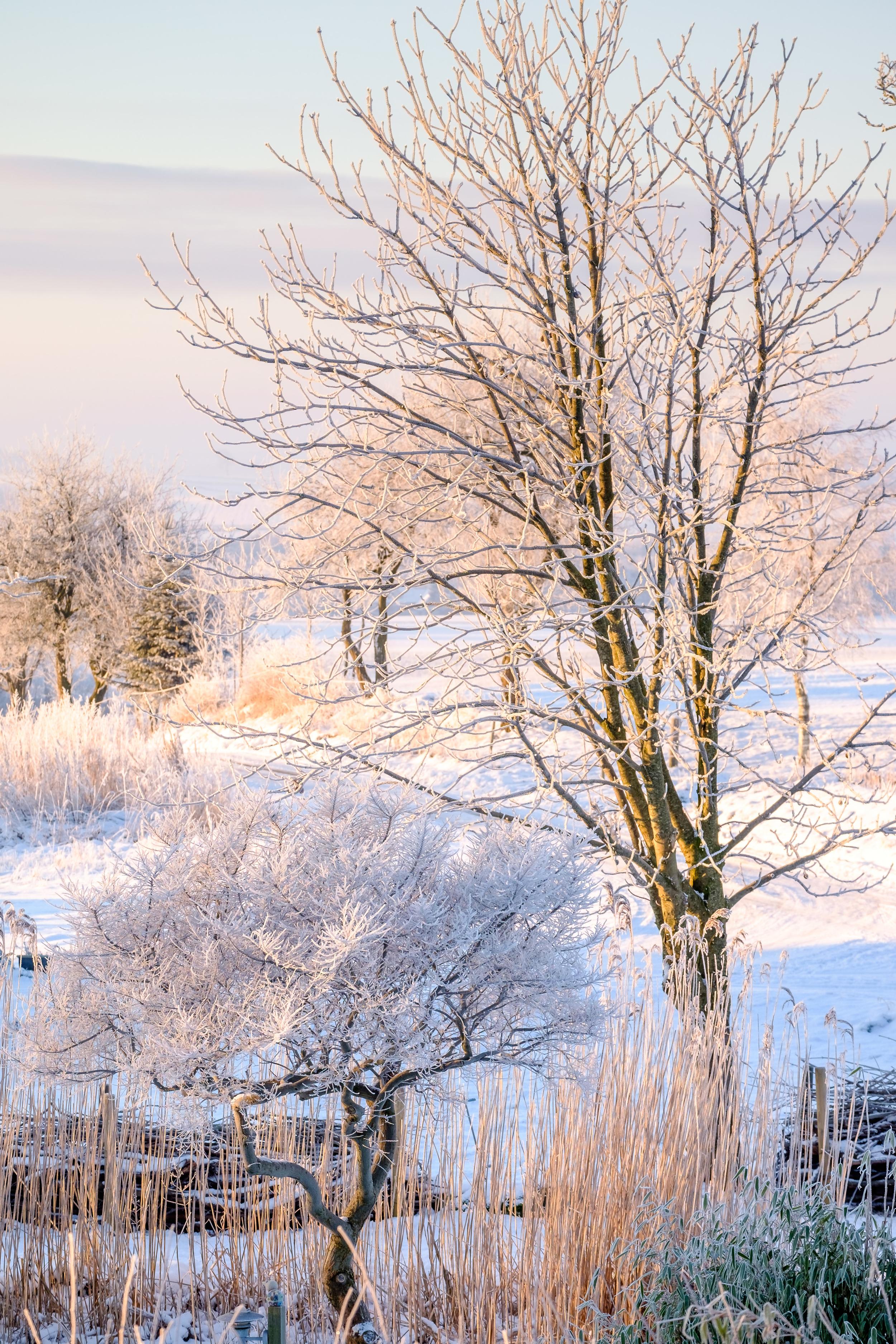 20160120-JensRohde-Frost over Monbjerg-5.jpg