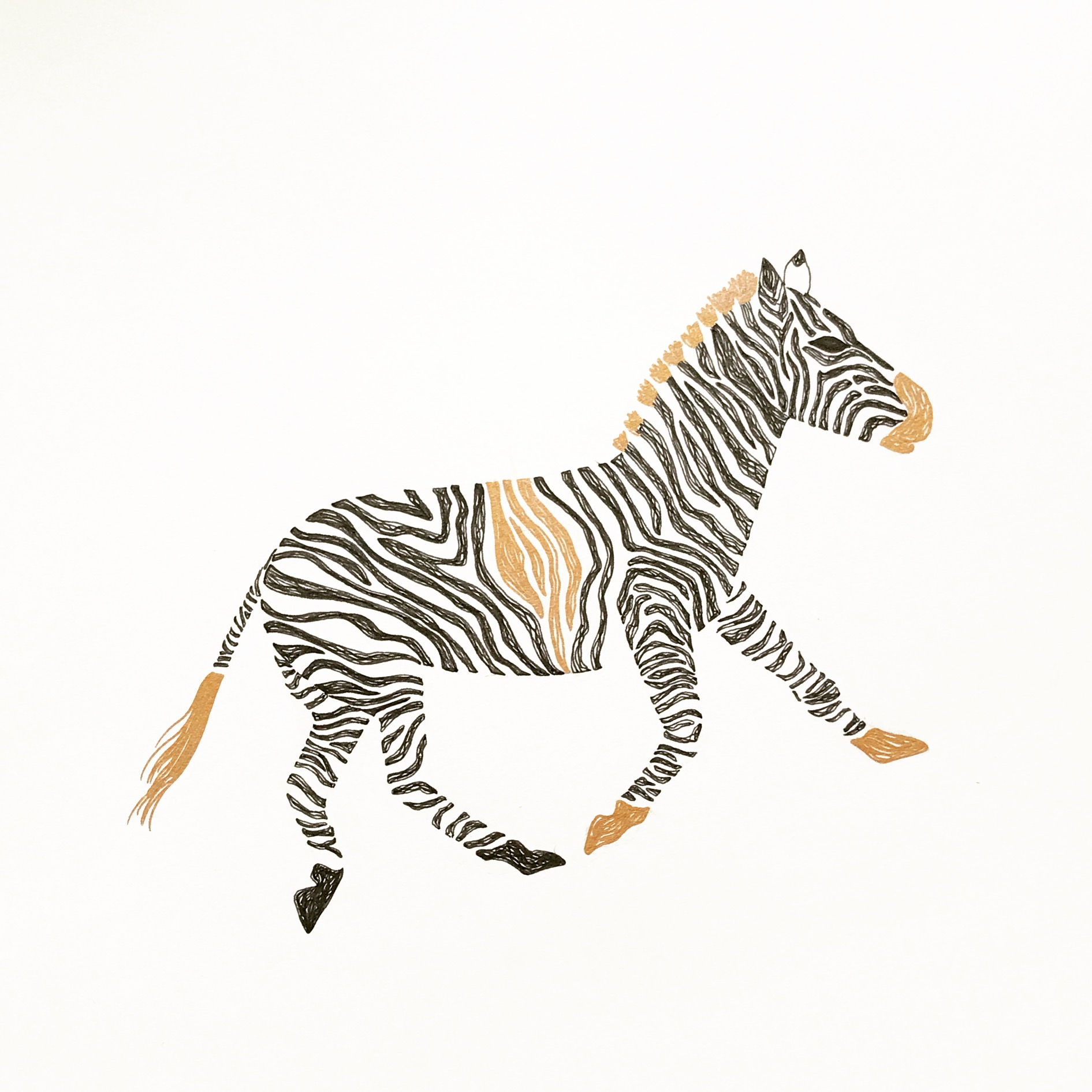 Zebra Illustration | 2018