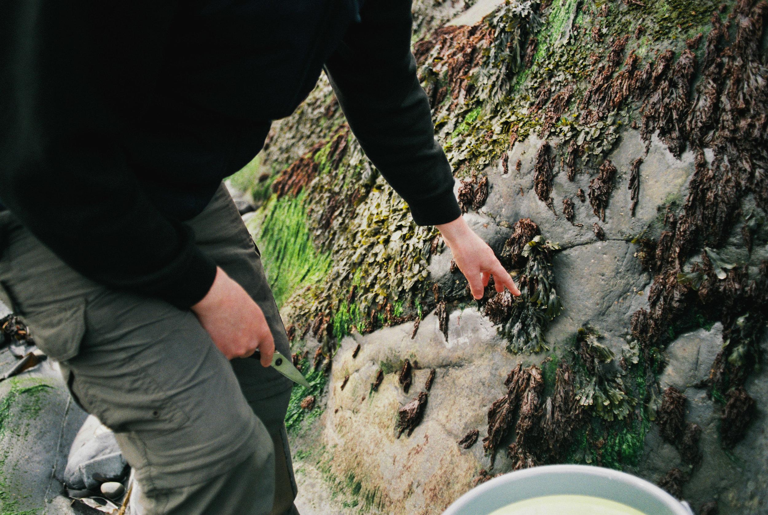 Seaweed-Foraging-Easdale-Duncan-Smallman.jpg