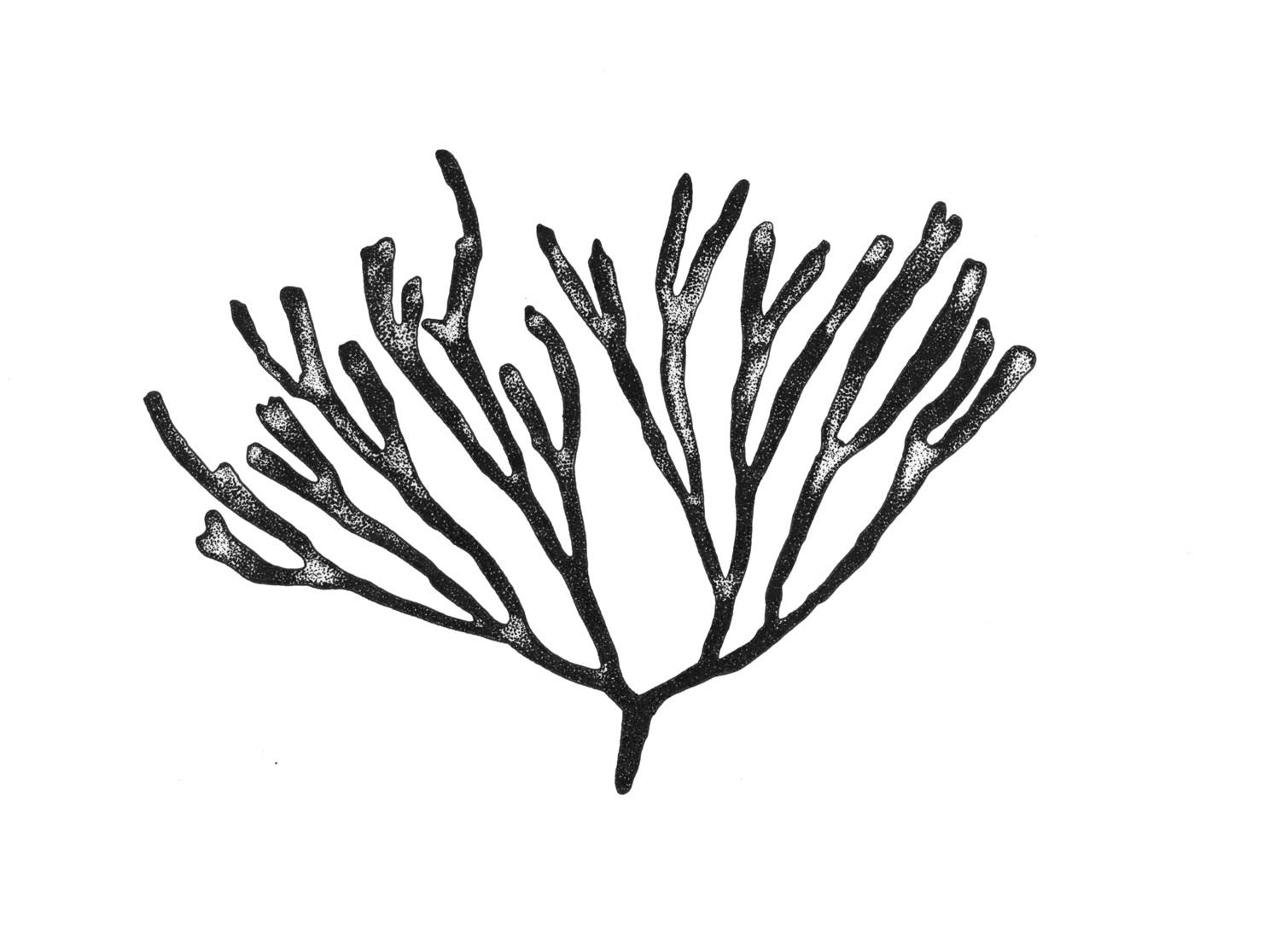 Frayed-Break-Seaweed-Illustration.jpg