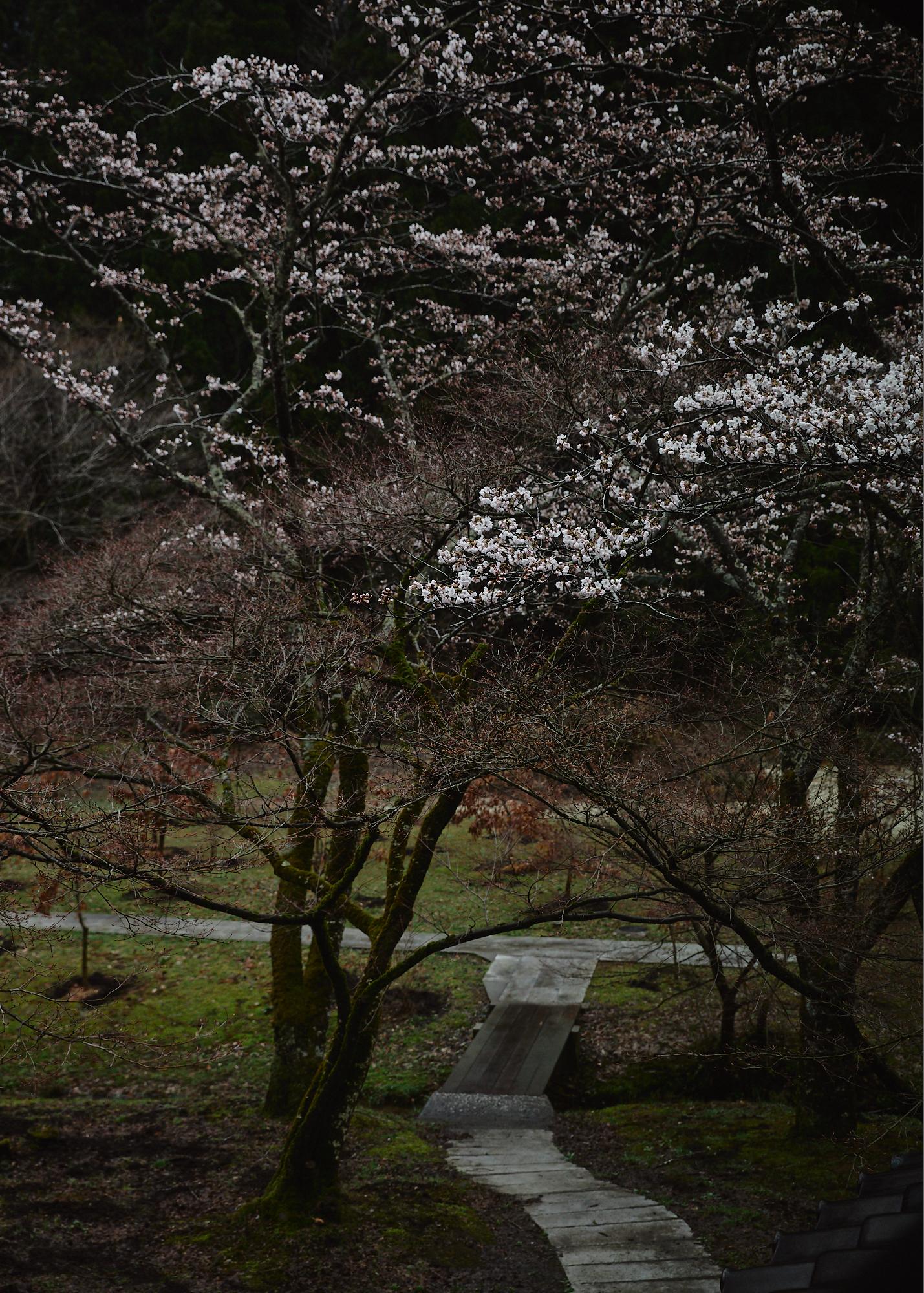 Yoyado Sakamoto - 25.jpg