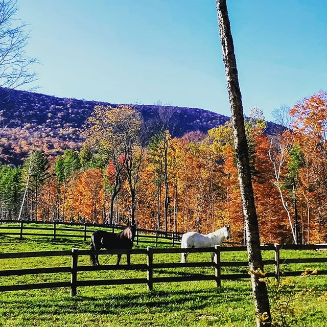 2019 Fall foliage in Vermont. A very special time of year. #vt #vermont #foliage