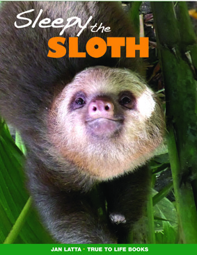 sleepy the sloth sml.jpg