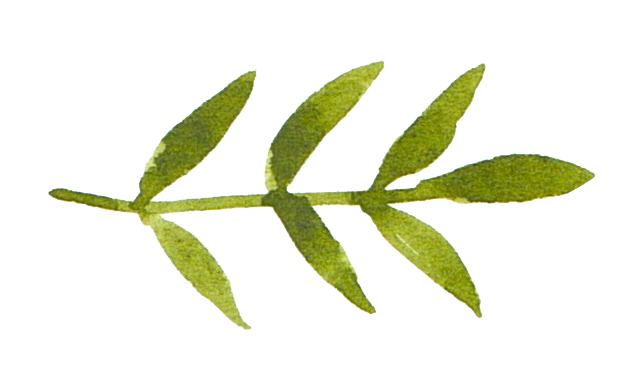 leaves 5.png