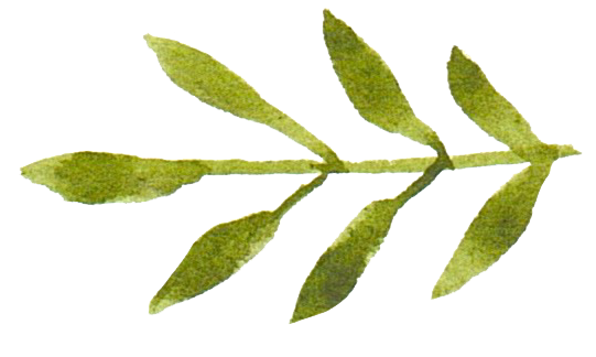 leaves 8.png