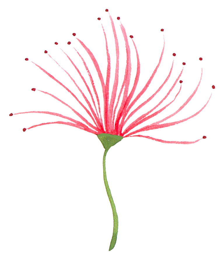 red flower 3.png