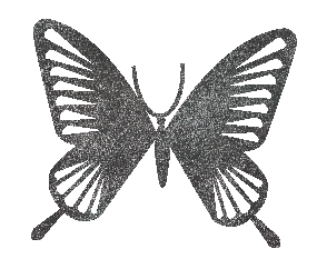 butterfly transparent background-03.png