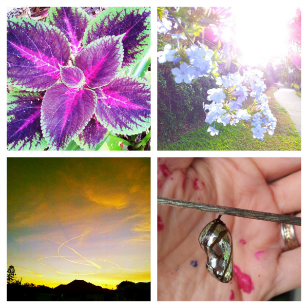 Nature Collage_600.jpg