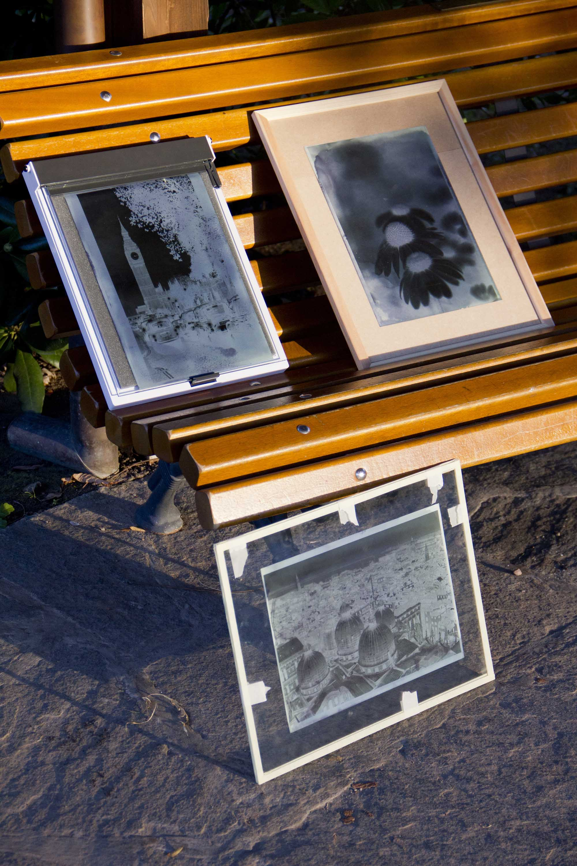 cyanotype photos.jpg