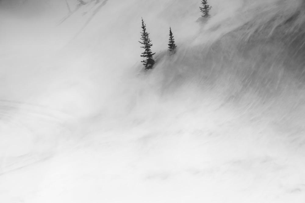 trees-wind_ifeverthennow.jpg