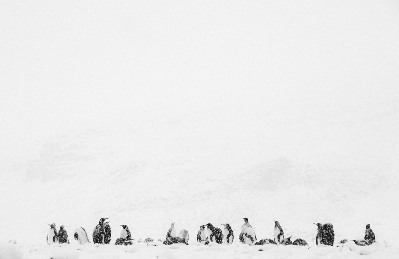 pinguins.jpeg