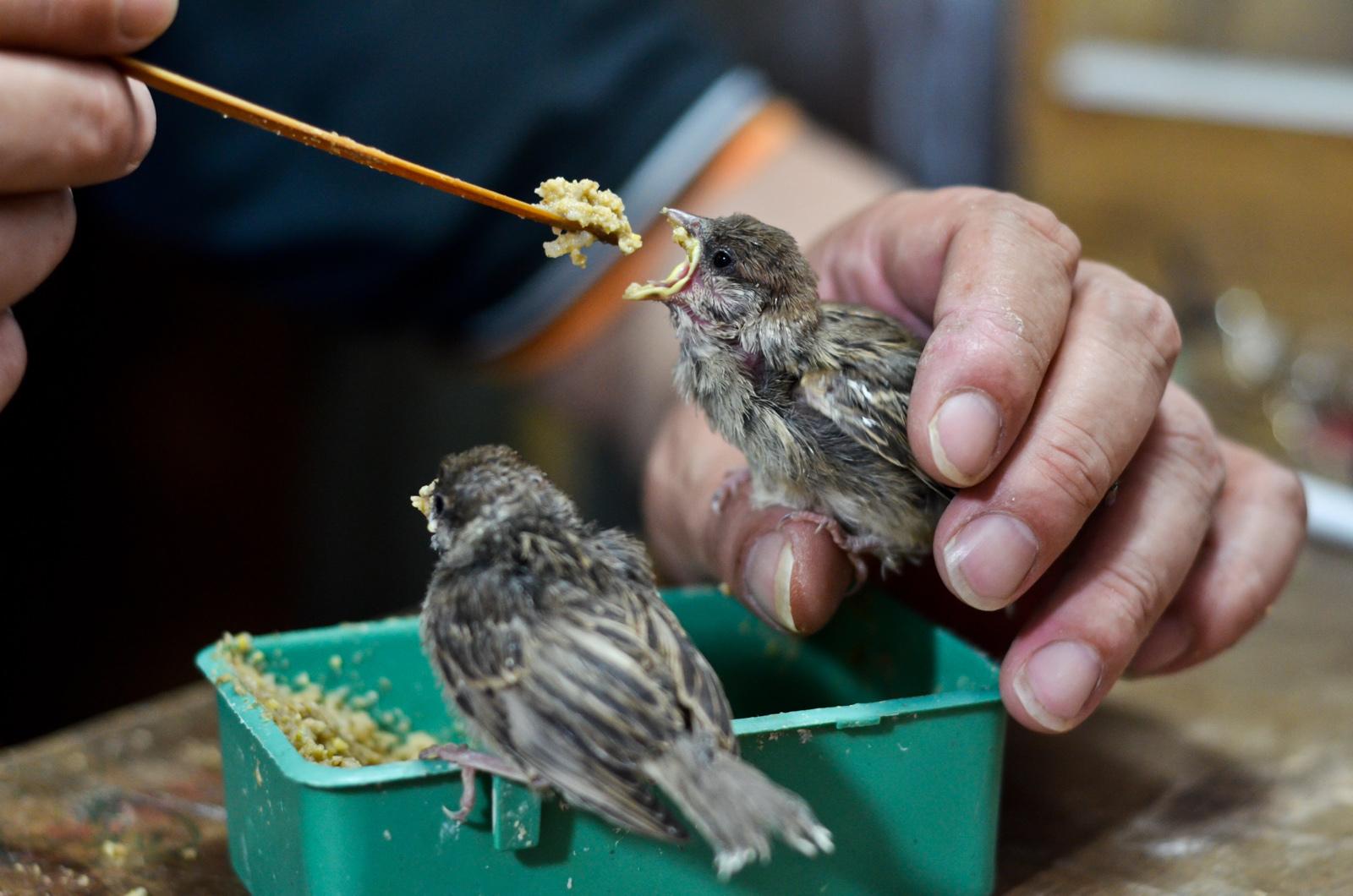 Oiseaux affamés