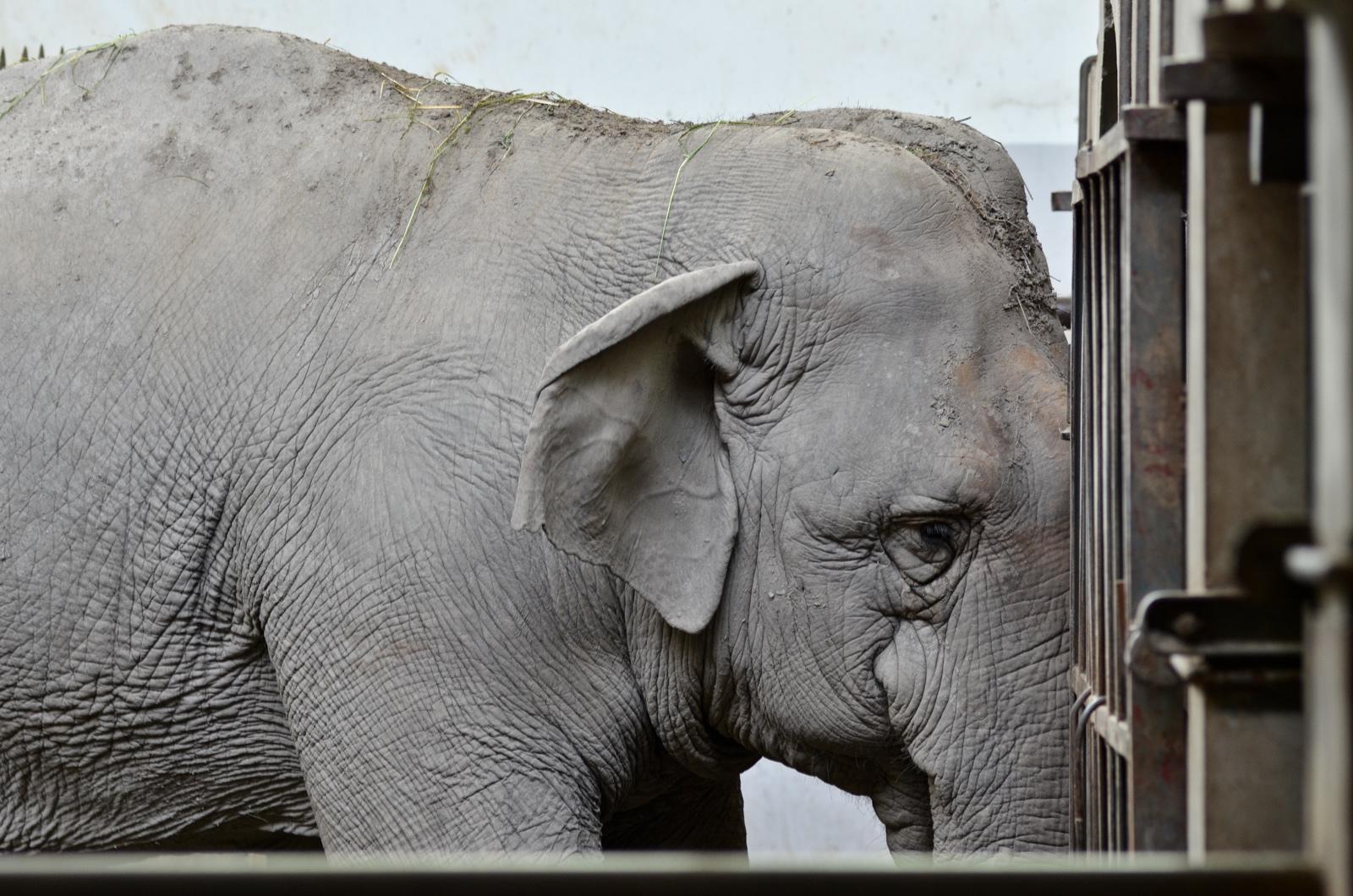 Prison ou zoo ?