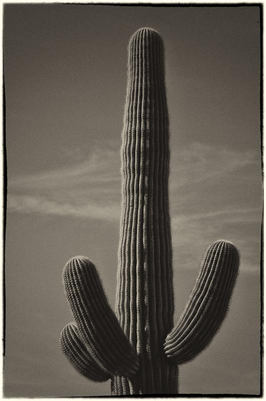 Saguaro Cactus 12_sep.jpg