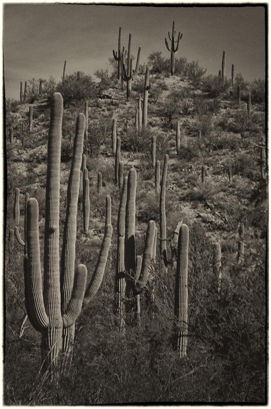 Saguaro NP 5_sep.jpg