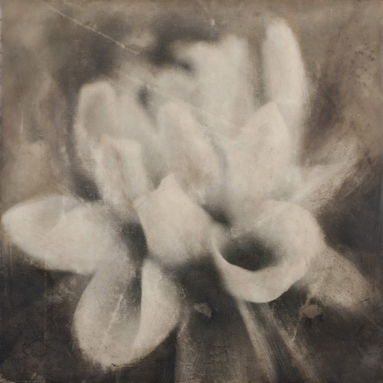 Encaustic photo. ©2014 Lee Anne White.