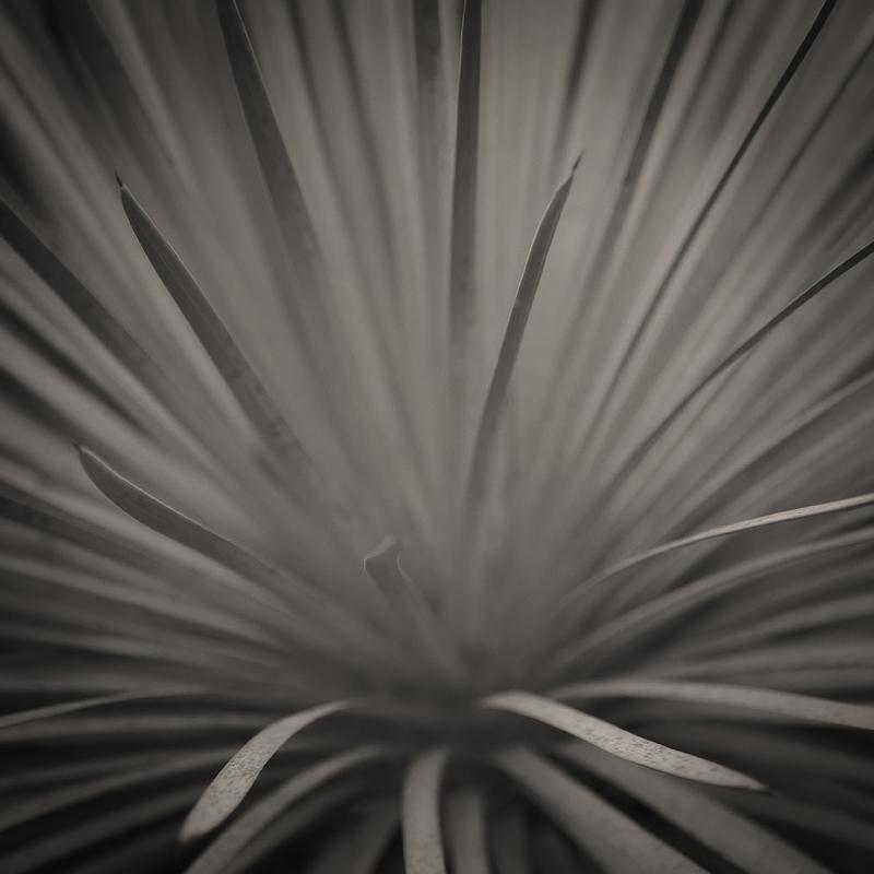 Quixote plant (Hesperoyucca whipplei)  2016. Photographed at the Tilden Regional Park Botanical Garden. © Lee Anne White