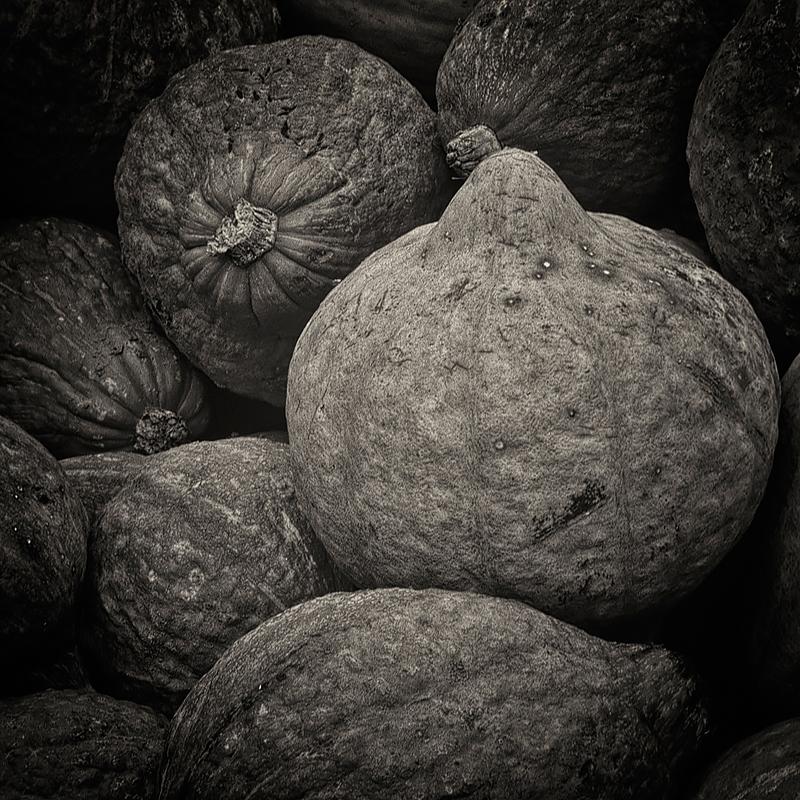 Hubbard squash . ©Lee Anne White.