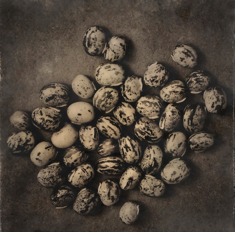 Heirloom velvet beans. Photo encaustic. ©Lee Anne White.