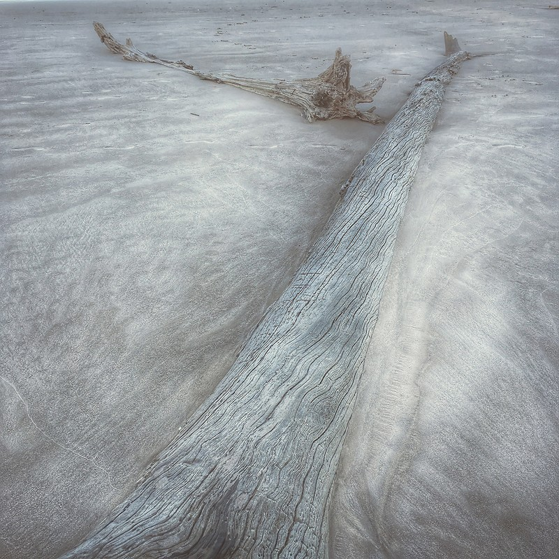 Driftwood. Boneyard Beach, Big Talbot Island, Florida. ©2017 Lee Anne White.