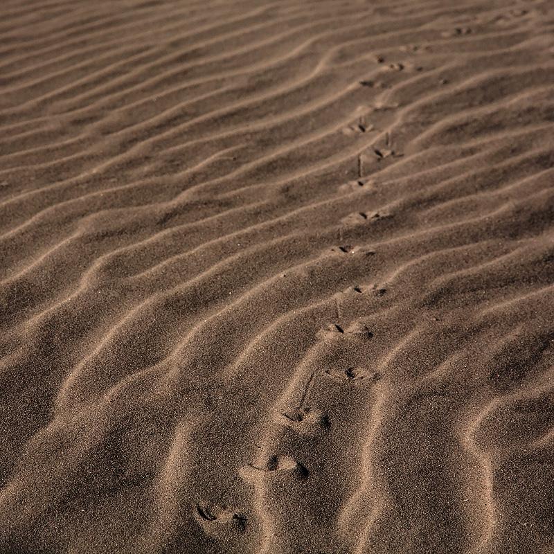 Tracks in Sand. ©2017 Lee Anne White.