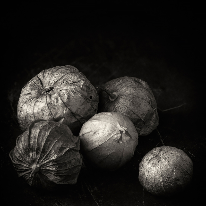 Tomatillos. ©2019 Lee Anne White.
