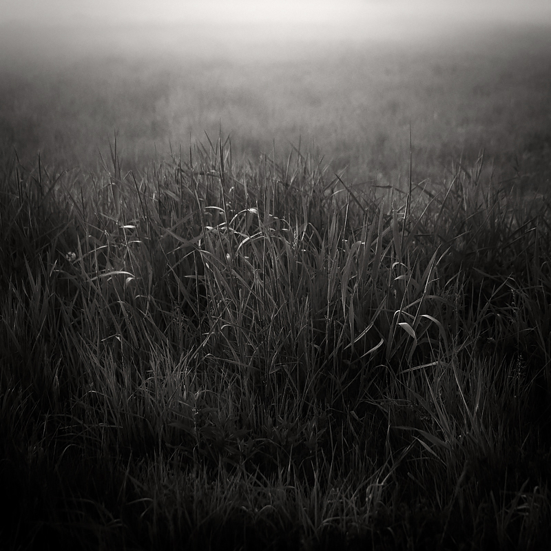 A foggy meadow by twilight. Madeline Island, Wisconsin. ©2019 Lee Anne White.