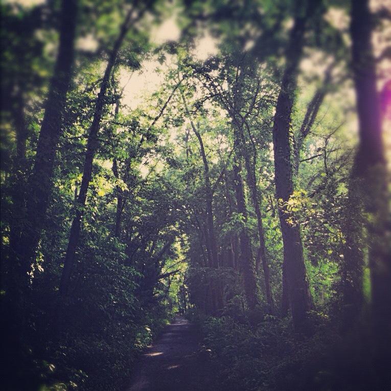 pathinwoods.jpg