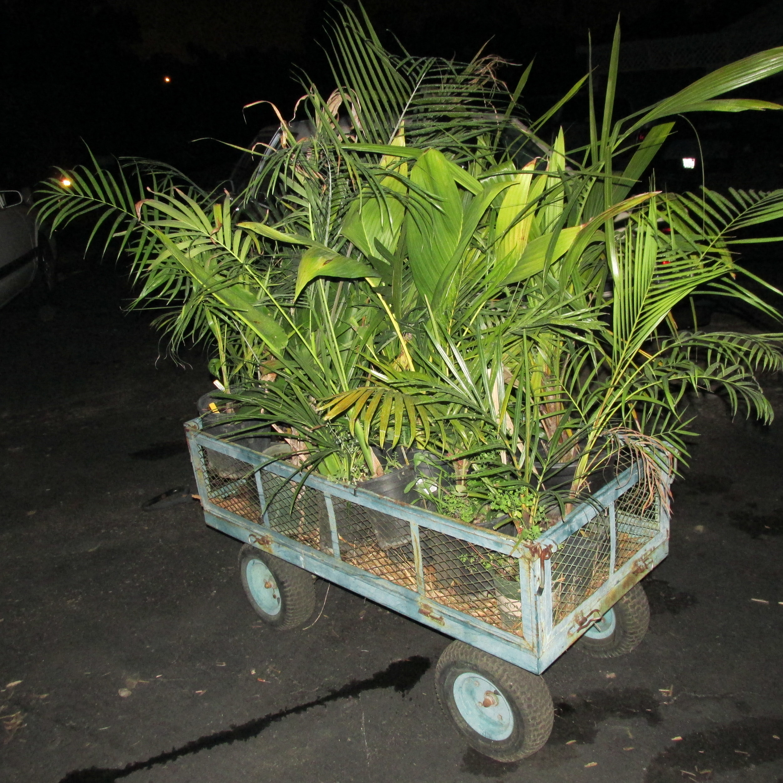 Some of the plants sold at a recent PSSC auction.