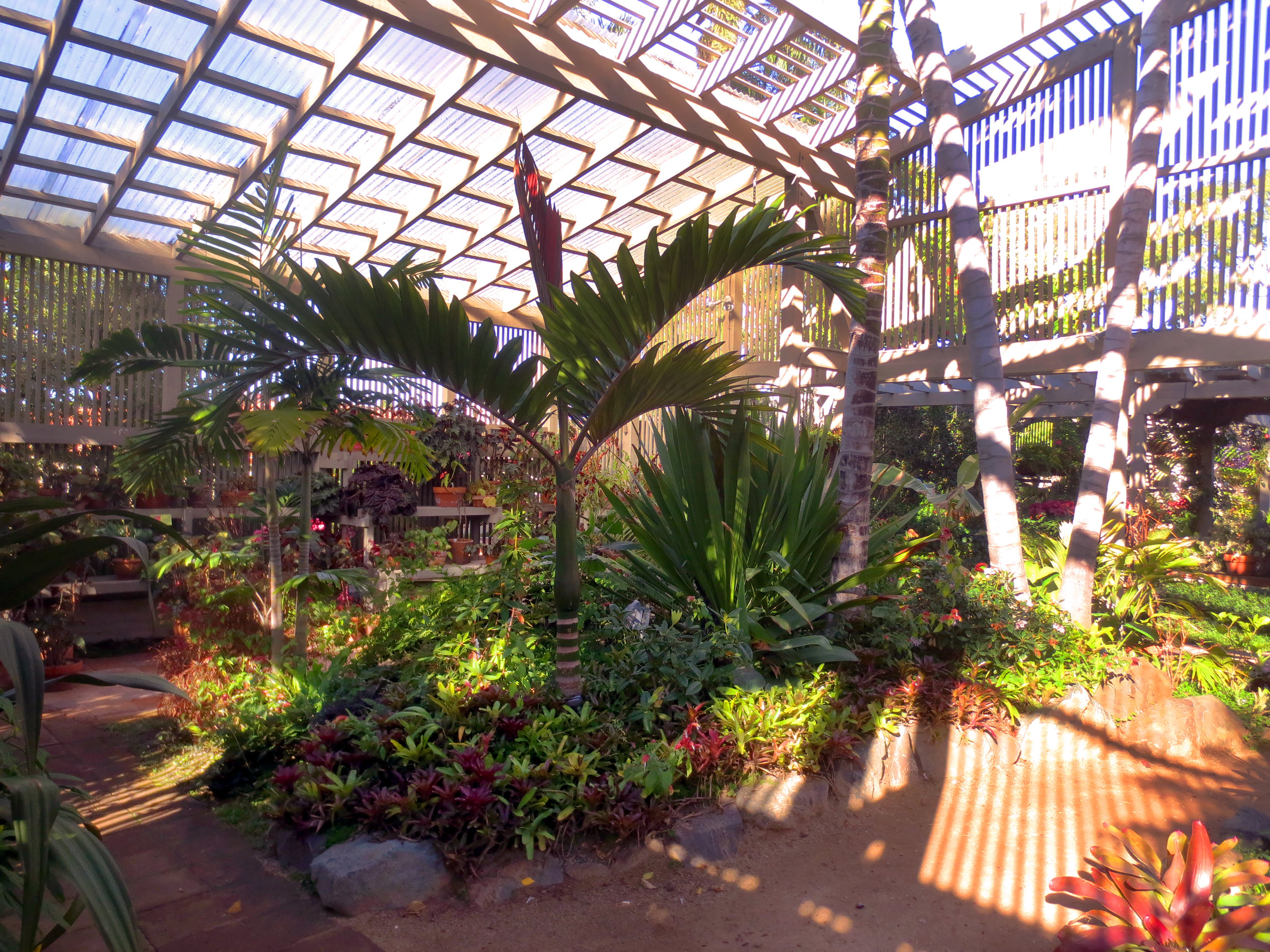 Sherman Library and Garden features a beautiful collection of plants. From beautiful rare palms and tropical foliage to drought tolerant succulents and cacti. Truly a must see for inspirational place!
