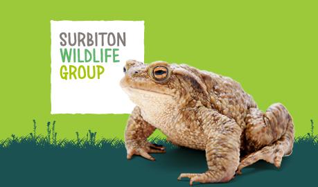Surbiton Wildlife Group    Visual identity