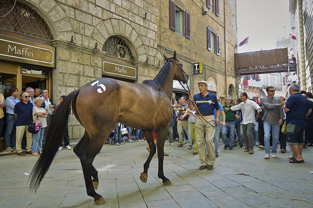 Palio di Siena-09.jpg
