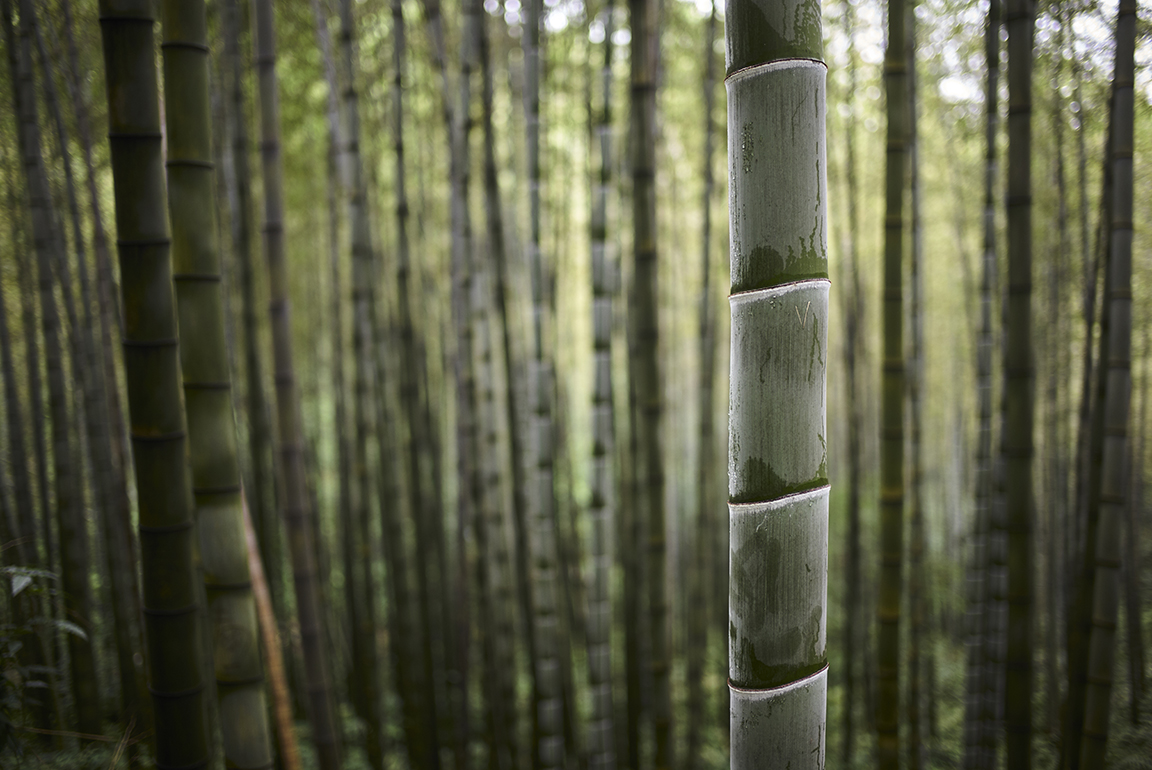 Shunan Bamboo Forest - China