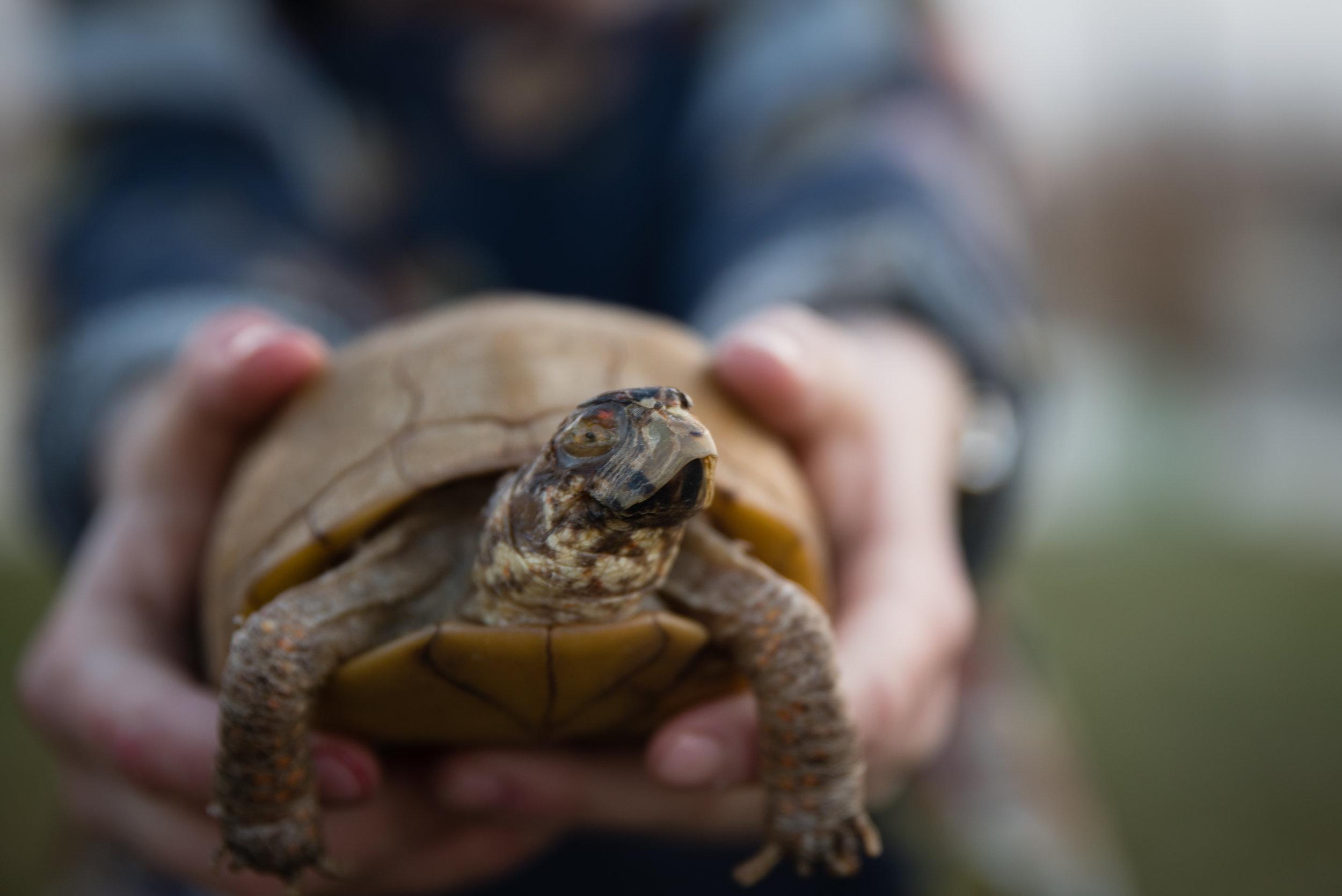 Regan turtle web size-5.jpg