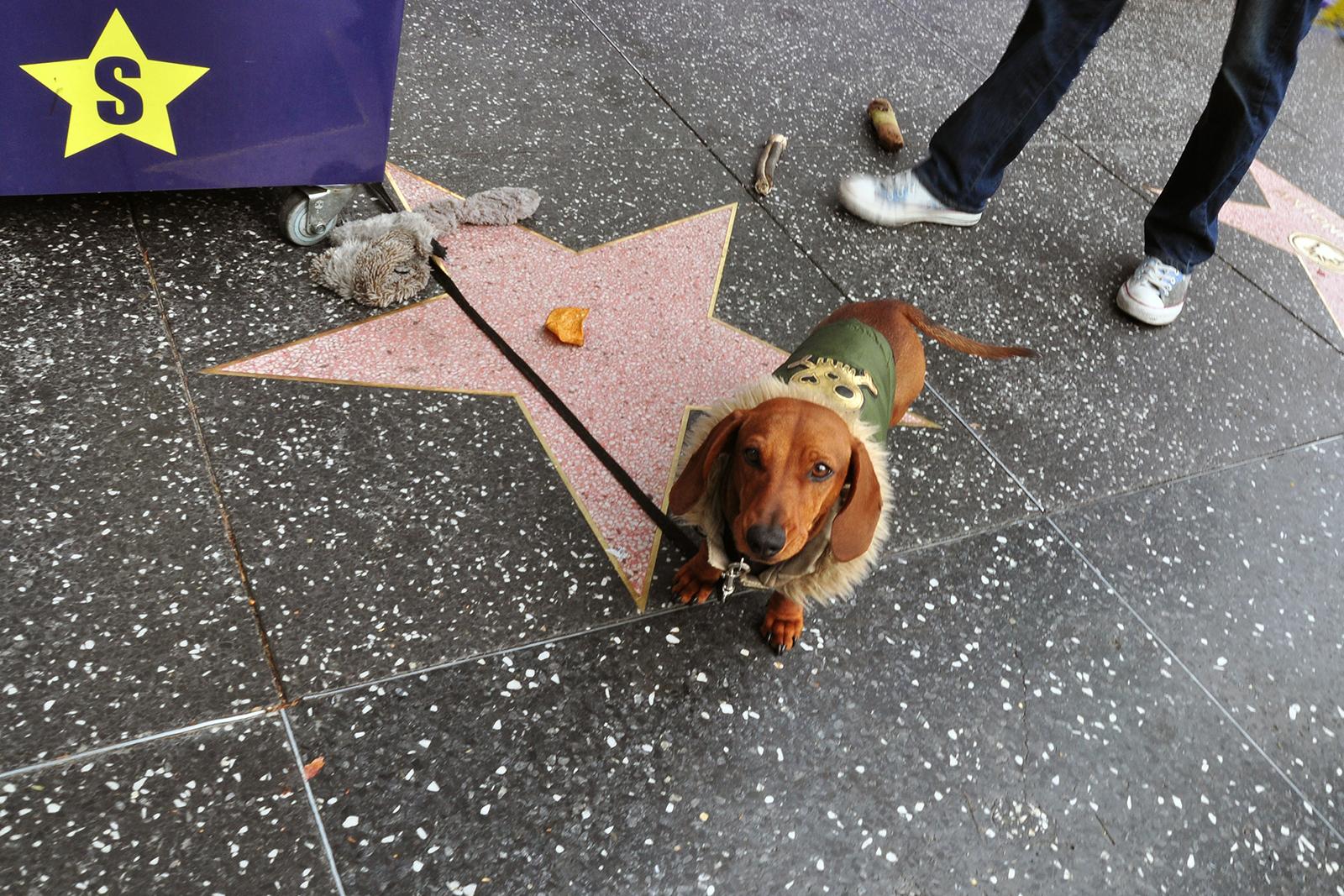Hollywood dog, 2013