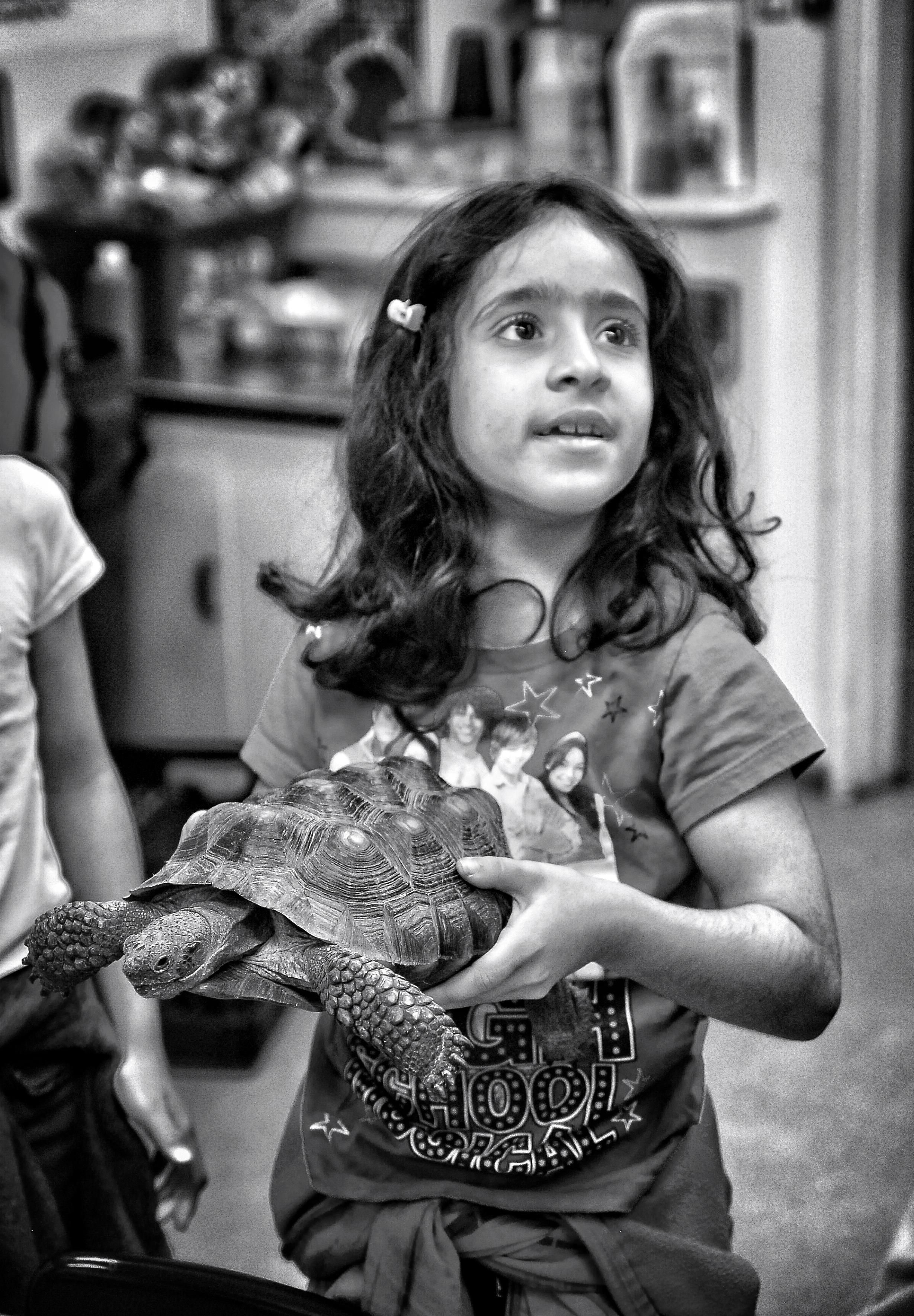 Reptile program VI